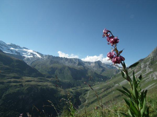 Lys Martagon en montant vers le petit Mt Blanc