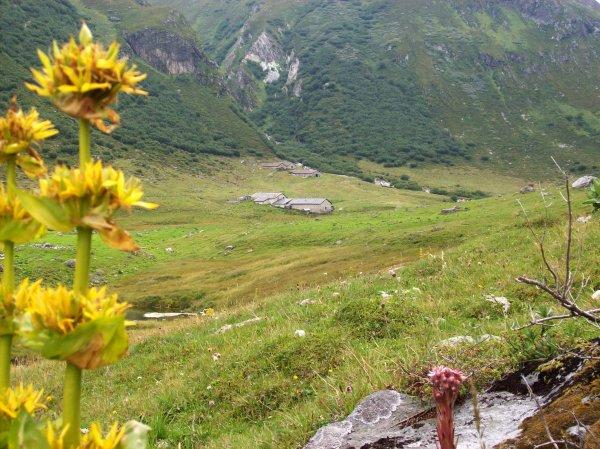 Arrivée à l'alpage de Ritort