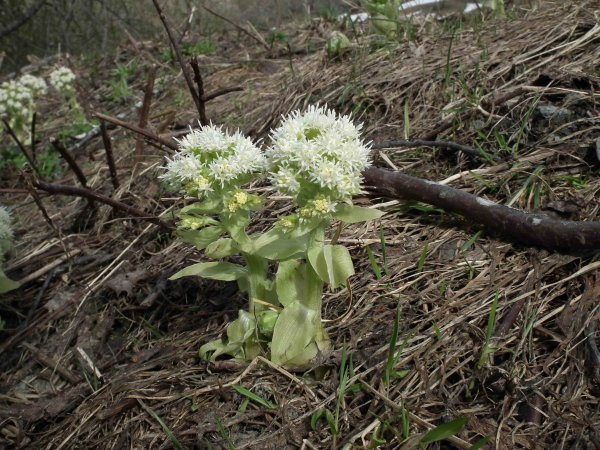 Vers le Laisonnay au printemps