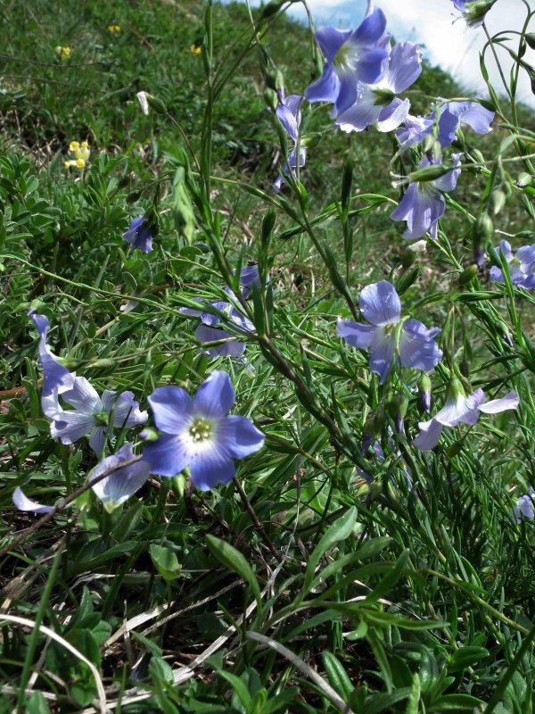 L'éclosion du printemps début mai