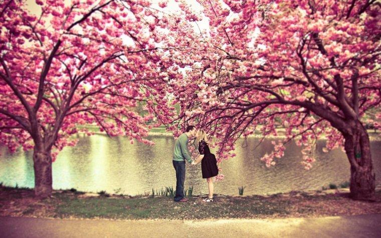 Fleur de Cerisier.