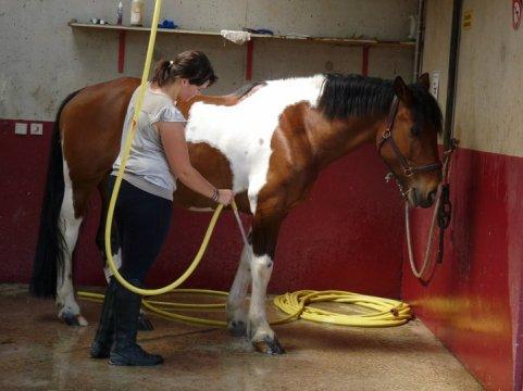 """""""Un jour peut-être, Avant d'apprendre au cavalier à désépaissir une crinière Ou à régler un enrênnement, On commencera par lui expliquer la manière de rassurer un cheval effrayé, Les 36 manières de récompenser, L'importance des distances en main . . """" ♥"""