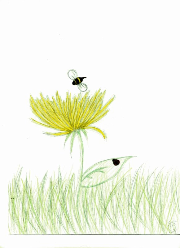 petite fleur :D