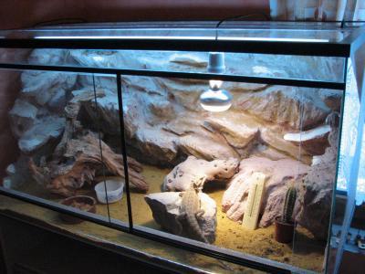 Le terrarium de l 39 uromastyx ocellata et du pogona vitticeps uro59 - Decor fond terrarium desertique ...