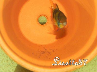 Petite surprise ce matin ( 07/03/11 )