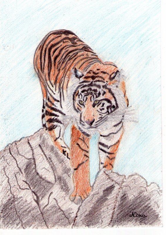 Le Tigre Solitaire, Créature D'une Beauté Et D'une Puissance Remarquables