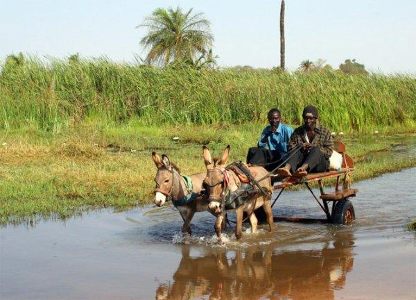 VISION DE NOS VILLAGES AU SENEGAL