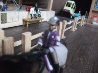 Suite : Le personnel, les établissements et les cavaliers