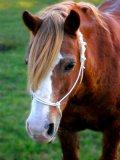 Photo de dream-horse-D