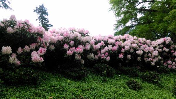 Les fleures de printemps !