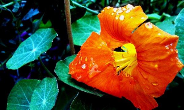 Fleur ♥ ( c'est moi qui est prise la photo)