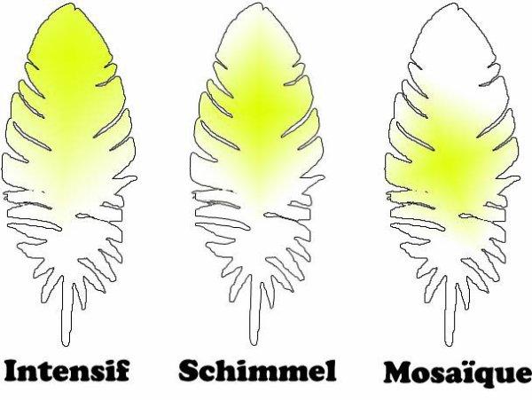 schema plumage