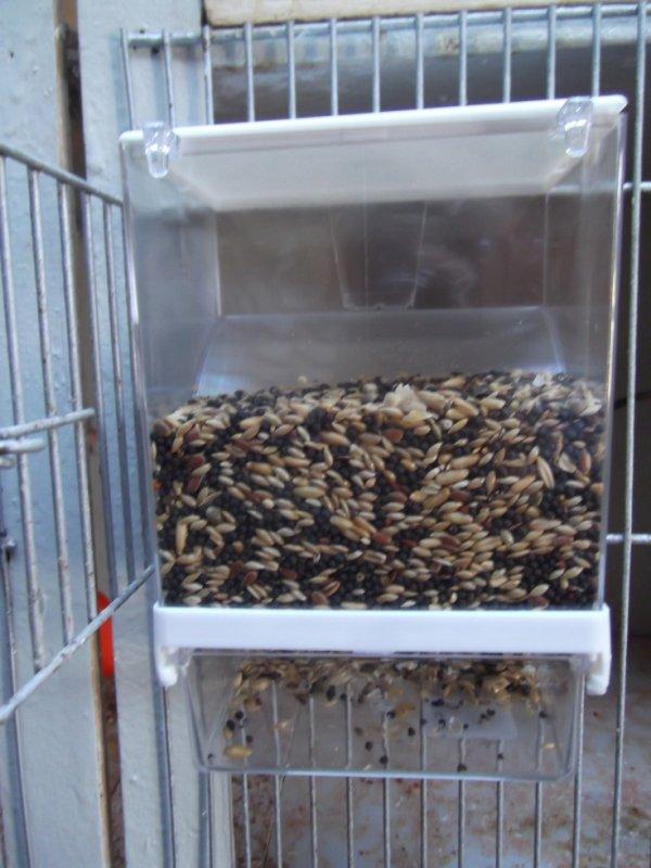 acheter plusieur mangoire recuperateur de graine ( je trouve sa tres bien sais pratique sa laisse pas de graine partout il sont recuperer dans un ressipiant en dessous)