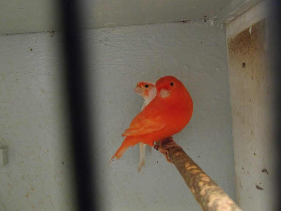Blog de eleveur-d-oiseaux-du02