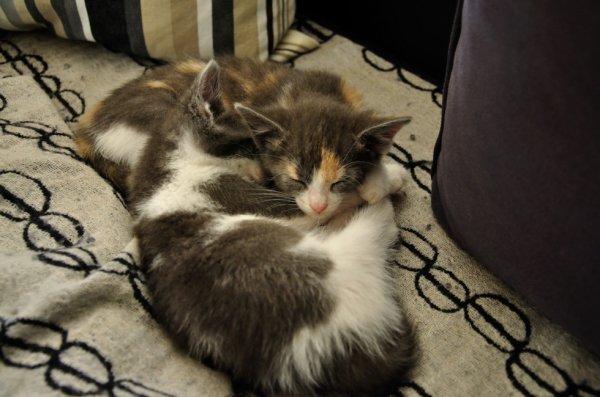 """C'est l'heure du P'tit somme!<3<3 """"Catsy&Clochette""""!^^"""