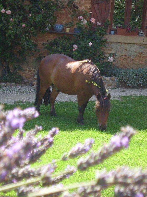 Un poney, un amour, mon amour.