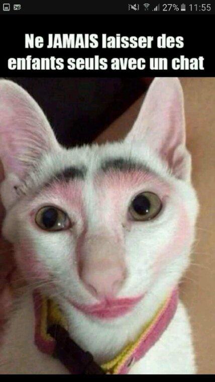 Pauvre chat