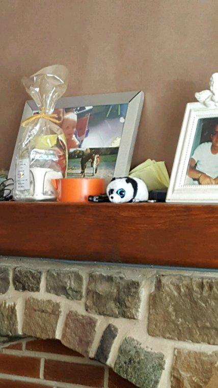Le panda qui veille sur le salon :p