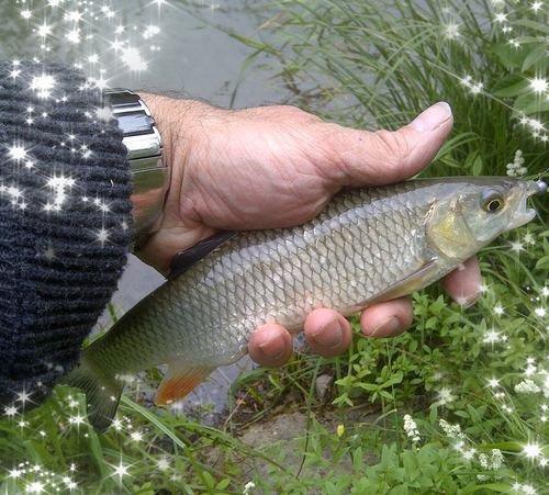 mini-fish....