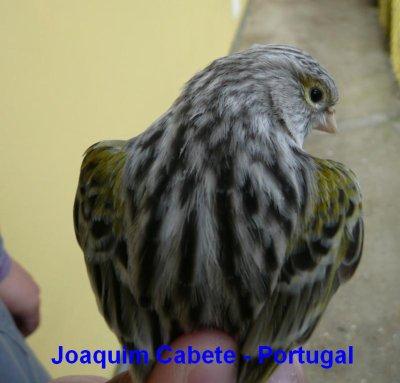 ÁGATA AMARELO MOSAICO