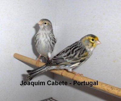 AGATAS - CASAIS PARA 2011