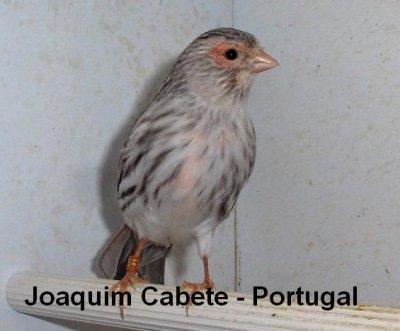 ÁGATA VERMELHO MOSAICO