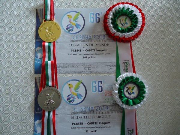 CAMPEONATO MUNDIAL CESENA - 2018