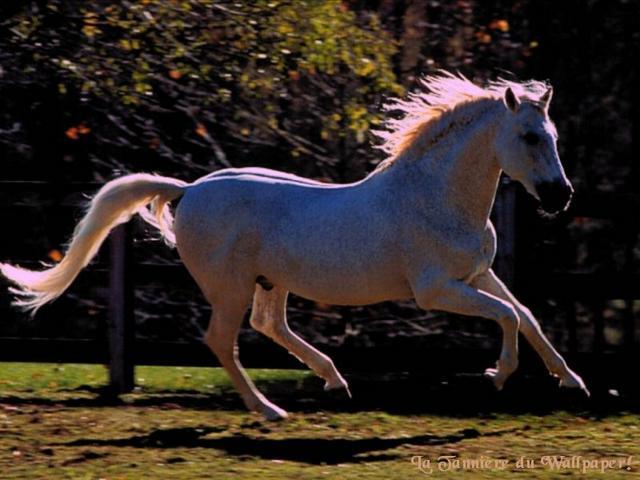regardé ce magnifique cheval