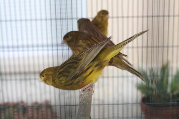 encore du brun jaune