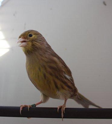 brun jaune