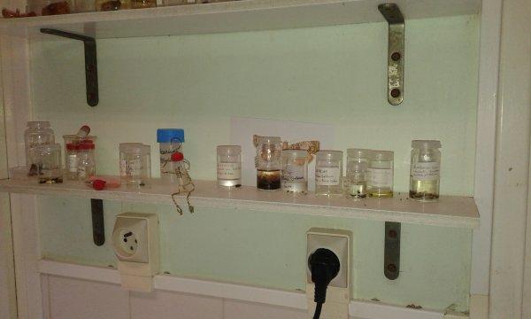 Au labo à l'I.N.R.A ....(institut national de recherche agronomique )