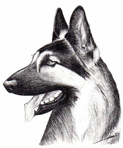 Dessin au fusain, chien 1 (indisponible)