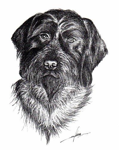 Dessin au fusain, chien 2 (indisponible)