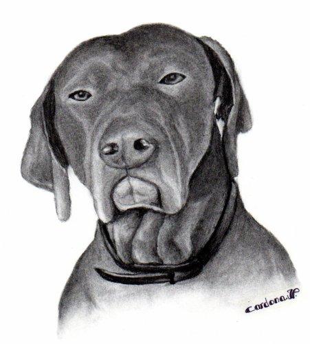 Dessin au fusain, chien (30 Euros)