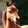Recherche--Equine