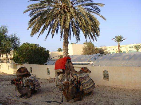 Tunisiee , Pays au Milles é une  Nuits <3  .