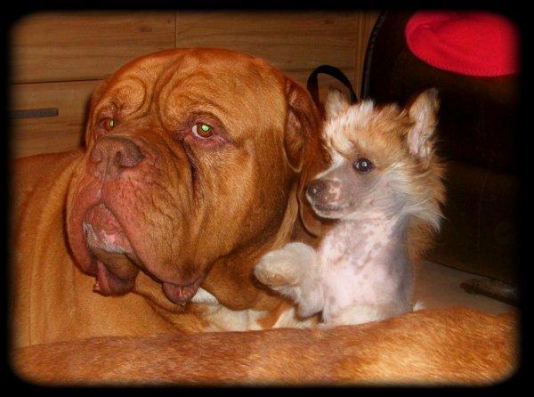 Elton et son mini pote Jack !