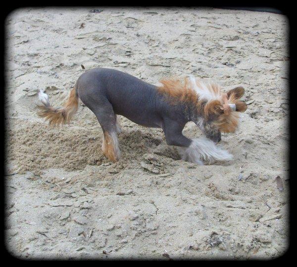 Petits jeux dans le sable