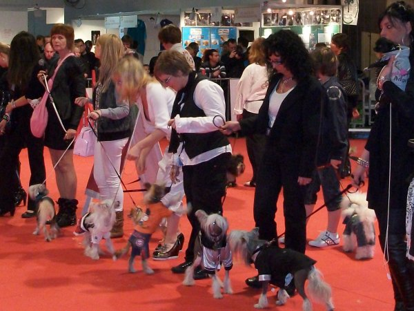 Jak défile pour le magasin Lunadog au salon  animalia 2011