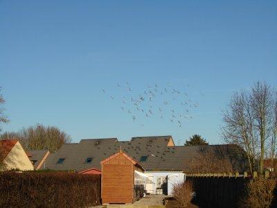 Les Jeunes 2011 au dessus du Pigeonnier