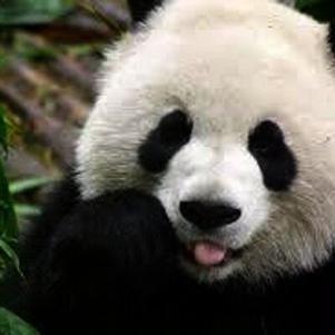 Pandasexy