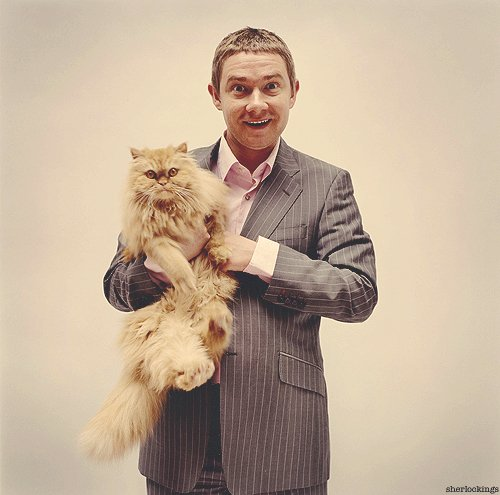 Qui a la meilleur expression ? Martin Freeman ou le chat ? XD