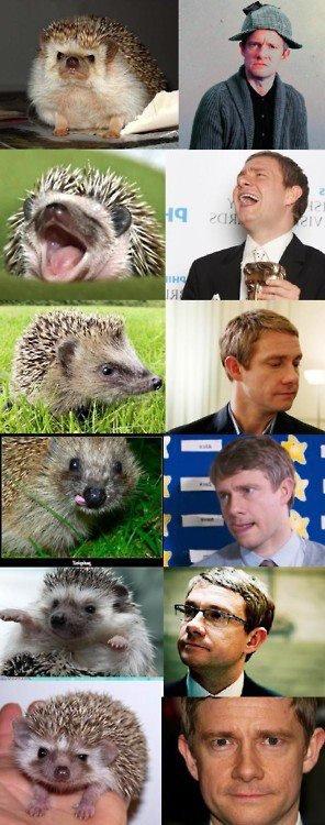 Dr Watson ou le hérisson refoulé...