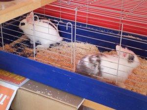 La famille lapin s'agrandie :) Acte I ^^