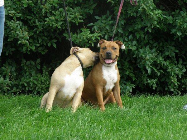 Laika et Kayna a 5 mois