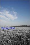 Photo de titidu7904
