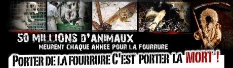 Fourrure torture
