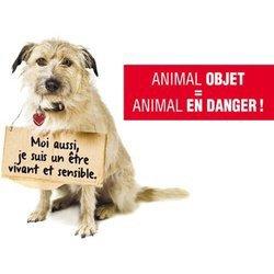 Animal objet, animal gadget