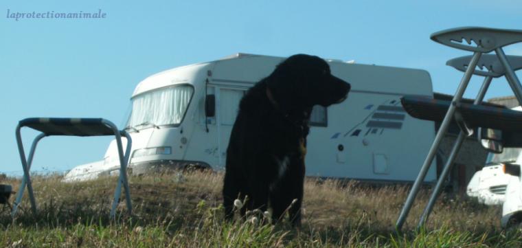 Article spécial été: emmener son chien en camping-car