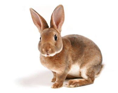 10 idées reçues sur le lapin: vraies ou fausses ?